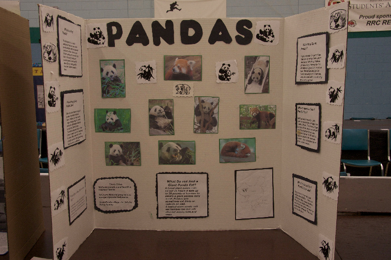 science-fair-2009-15